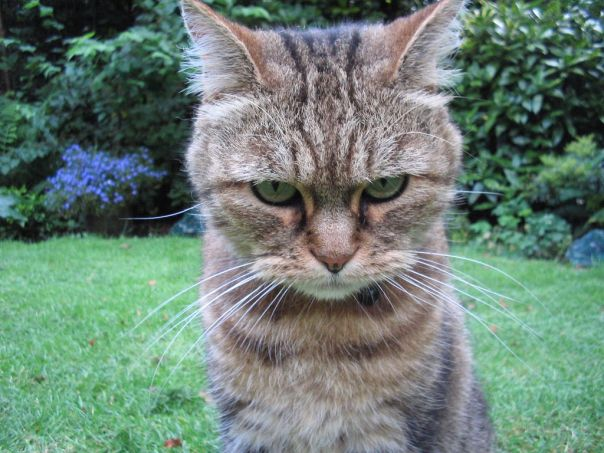 Grumpy-looking cat