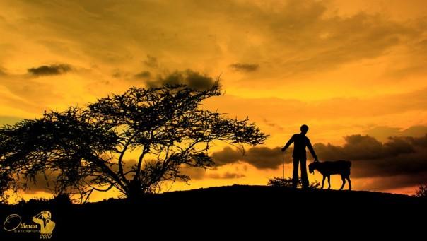 Shepherd by Othman Mohammad