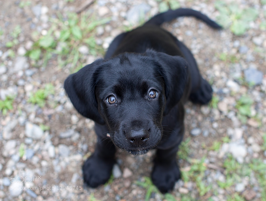 Many-Characters-Puppy-dog-eyes.jpg